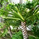 Beautiful Palms and Greenery Outside the Property - Exterior at Oliverio