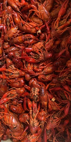 Seasonal - Boiled Crawfish at McFarland's Cafe de Cajun