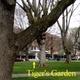 Tigers Garden