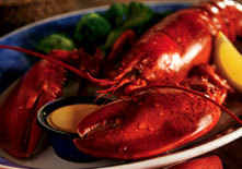 Live Maine Lobster at Red Lobster